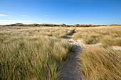Dunes on the beach, Ellenbogen peninsula, Sylt island, North Sea, North Friesland, Schleswig-Holstein, Germany