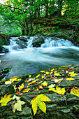 River Selke Fall, Selke Valley, Harz Mountains, Saxony-Anhalt, Germany