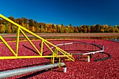 Cranberry harvesting operations at the Vilas Cranberry Co, marsh at Manitowish Waters, Wisconsin, USA