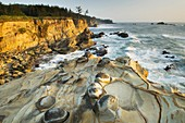 The rugged headlands of Shore Acres State Park on the Oregon Coast  The sandstone cliffs are studded with whimsical mineral concretions