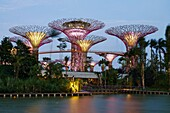 Night view of The Supertrees Grove at Gardens by the Bay