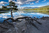 The picturesque Lake Beauvert, Jasper National Park, Alberta, Canada