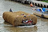 Vietnam, Mekong delta, Soc Trang, transporting rice thatch