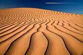 Algodones Dunes or Imperial Sand Dunes, Imperial County, California, United States of America, USA