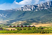 Emblematic Ysios winery in Laguardia designed by Santiago Calatrava, La Rioja, Alava, Basque Country, Spain