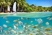 Thailand - half underwater sea scene of small fish at Ko Samet Island, Thailand, Asia