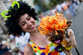 A dog, wearing a fancy wig, takes part in the Blocao pet carnival show at Copacabana beach in Rio de Janeiro, Brazil, 12 February 2012