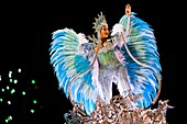 A dancer of Imperatriz samba school performs atop a float during the Carnival parade at the Sambadrome in Rio de Janeiro, Brazil, 20 February 2012  The Carnival in Rio de Janeiro, considered the biggest carnival in the world, is a colorful, four day celeb