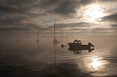 Boats in Misty Harbor at Sunrise, Castine, Maine, USA