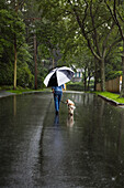 Woman with Umbrella Walking Dog down Residential Street in Rain, Rear View