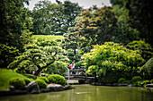 Japanese Hill-and-Pond Garden, Brooklyn Botanic Garden, Brooklyn, New York City, USA