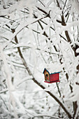 Birdhouse and Snowy Branches