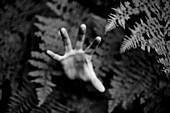 Hand Reaching Through Ferns