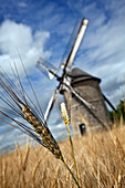 The Stone Windmill In Frouville-Pensier (1826) Amongst The Wheat, Beauce, Ozoir-Le-Breuil, Eure-Et-Loir (28), France