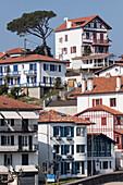 Basque Houses And Parasol Pine In Saint-Jean-De-Luz, Basque Country, Pyrenees-Atlantiques (64), Aquitaine, France