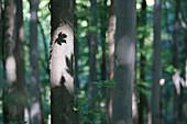 Forest Surrounding The Kalwaria Zebrzydowska Sanctuary, Malopolska, Poland