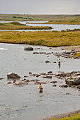 View Overlooking Anglers Fly Fishing In Bristol Bay Near Crystal Creek Lodge, King Salmon, Southwest Alaska, Summer