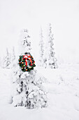 Hoarfrost Covered Spruce Tree With A Christmas Wreath Hanging On It, Fog, Winter, Eureka Summit, Alaska.