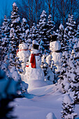 'Snowman family wearing scarves and black top hats standing in front of a snowcovered spruce forest at dusk;Anchorage alaska usa'