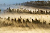'Forest Of Spruce Trees With Mist At Sunrise In Gaspesie National Park;Quebec Canada'
