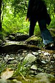 Walking trails and footpaths of Snowdonia, Nant Ggwynant, Snowdonia National Park, North Wales, Wales, UK