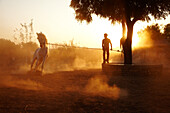 Man exercising white stallion at Castle Bijaipur stables Rajasthan India © Andy Kerry / Axiom
