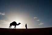 Silhouette of Berber 'Blue man' leading camel across sand dune at dusk in Erg Chebbi near Merzouga, Sahara Desert, Morocco