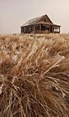 Old Abandoned Homestead In The Prairies, Saskatchewan Canada