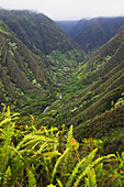 Hawaii, Maui, Waihee, A view of Waihee Valley with tall lush cliffs