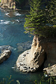 Oregon, Southern Coast, Sea Lions sunning on rock near Newport.