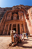 Camel resting in front of Al Khazneh, Petra, Jordan