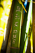 Chinese script carved on bamboo branch, Yunnan, China