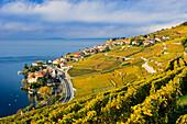 Vineyards, Rivaz, Lavaux, Switzerland