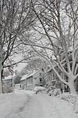 Snowy Residential Street, Marblehead, Massachusetts, USA