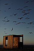Modern Wood Structure Near Sea with Flying Seagulls at Sunset, La Coruna, Spain