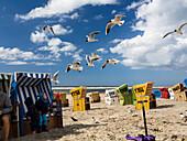 Children feeding the gulls, Larus ridibundus, Langeoog Island, North Sea, East Frisian Islands, East Frisia, Lower Saxony, Germany, Europe