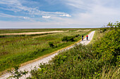 Cycle track along the dunes neat Loog, Juist Island, Nationalpark, North Sea, East Frisian Islands, East Frisia, Lower Saxony, Germany, Europe