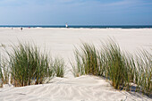 Dunes at the beach, Juist Island, North Sea, East Frisian Islands, East Frisia, Lower Saxony, Germany, Europe