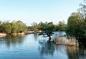 The river Oder at Kuestrin, Maerkisch-Oderland, Brandenburg, Germany