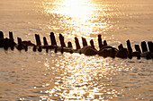 Old groynes in Kuehlungsborn West at sunrise, Seaside resort of Kuehlungsborn, Mecklenburg-Western Pomerania, Germany