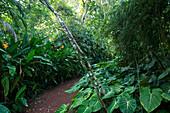 Weg zwischen tropischen Pflanzen im Brief Garden von Bevis Bawa bei Bentota, Südwestsküste Sri Lanka