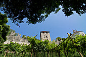 Walls of the fortress of Branzoli above Chiusa (Klausen) and vines, Val di´Isarco, Dolomite Alps, South Tyrol, Upper Adige, Italy