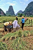 Local farmers grinding rice in mountain area of Li River in unique Guilin Yangshuo area of China