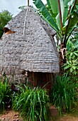 Arba Minch Chencha Ethiopia Africa Dorze tribe village elephant type home in village looks like elephant which they now miss