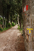 Tau symbol in an alley of cypress trees, direction sign for the Via Francigena di San Francesco, St. Francis Way, St. Francis of Assisi, Assisi, UNESCO World Heritage Site, Assisi, province of Perugia, Umbria, Italy, Europe