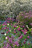 Tulpen und Frühlingsblumen in einem Blumenbeet, Hermannshof, Weinheim, Baden-Württemberg, Deutschland, Europa