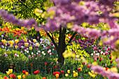 Frühlingsblumen in einem Garten, Hermannshof, Weinheim, Baden-Württemberg, Deutschland, Europa