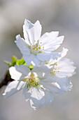 Nahaufnahme einer Blüte, Deutschland, Europa