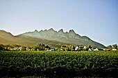 Winery in the Stellenbosch region, Western Cape, South Africa, Africa