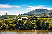 Weinanbau, Sandemann, Regua, Douro Gebiet, Porto, Nordportugal, Portugal
